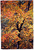 Autumn - watercolor on paper painting by Joseph Raffael