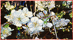 Spring Blossoming - watercolor on paper painting by Joseph Raffael