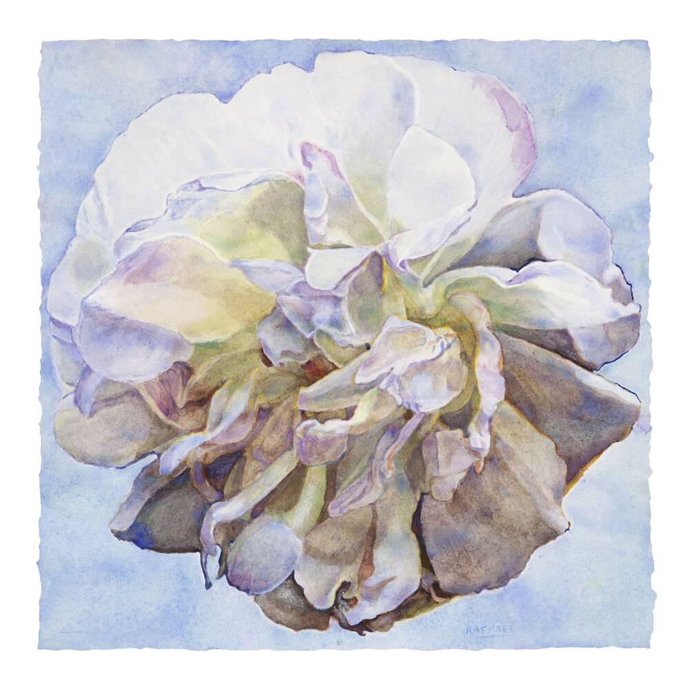Elegy II - watercolor on paper by Joseph Raffael