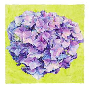 Hydrangea · watercolor on paper, 88.9 x 88.9 cm - 35  x 35  in. | 2020 by Joseph Raffael