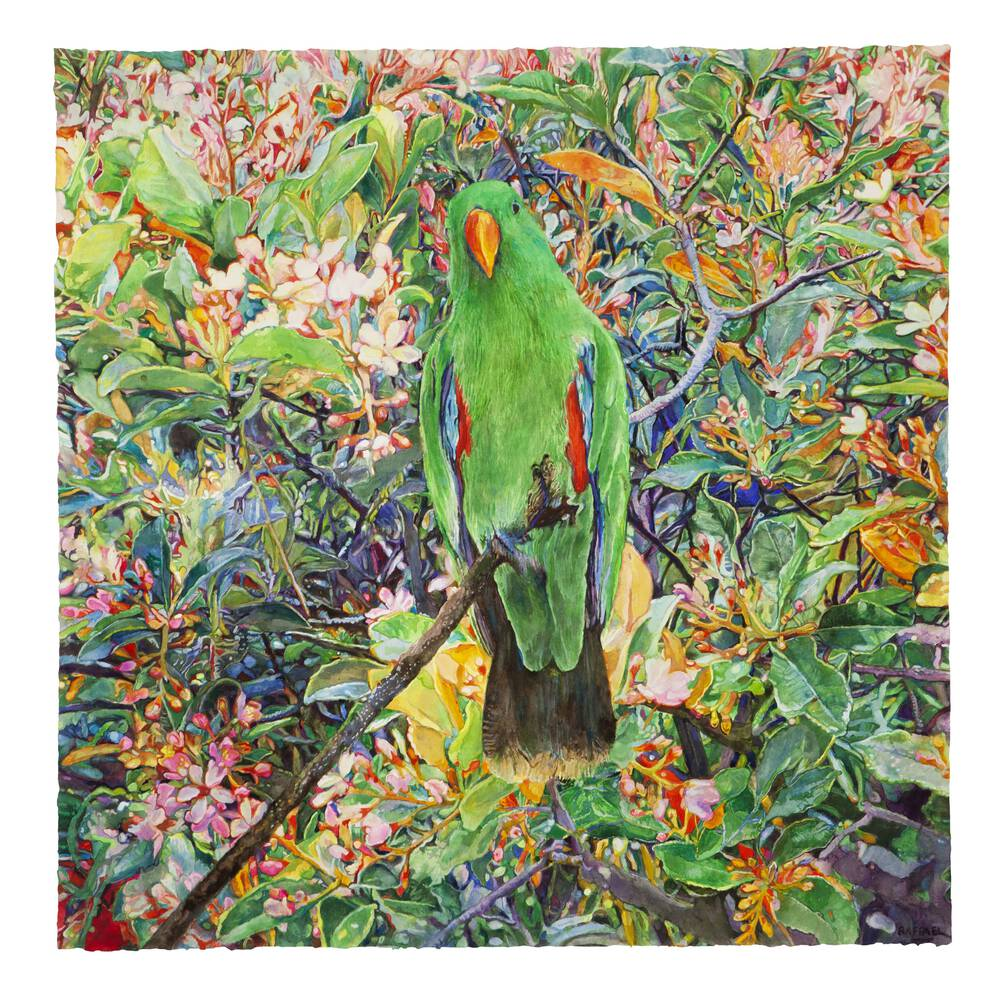 Parrot Moving Toward the Light - watercolor on paper by Joseph Raffael