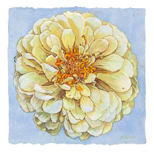 Small Zinnia - watercolor on paper painting by Joseph Raffael